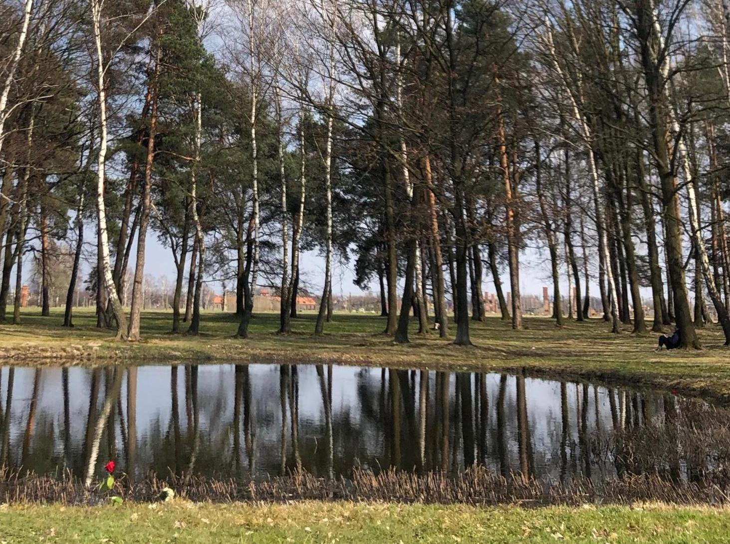 Photo of Birkenau ash pond, a single red flower growing at its bank.